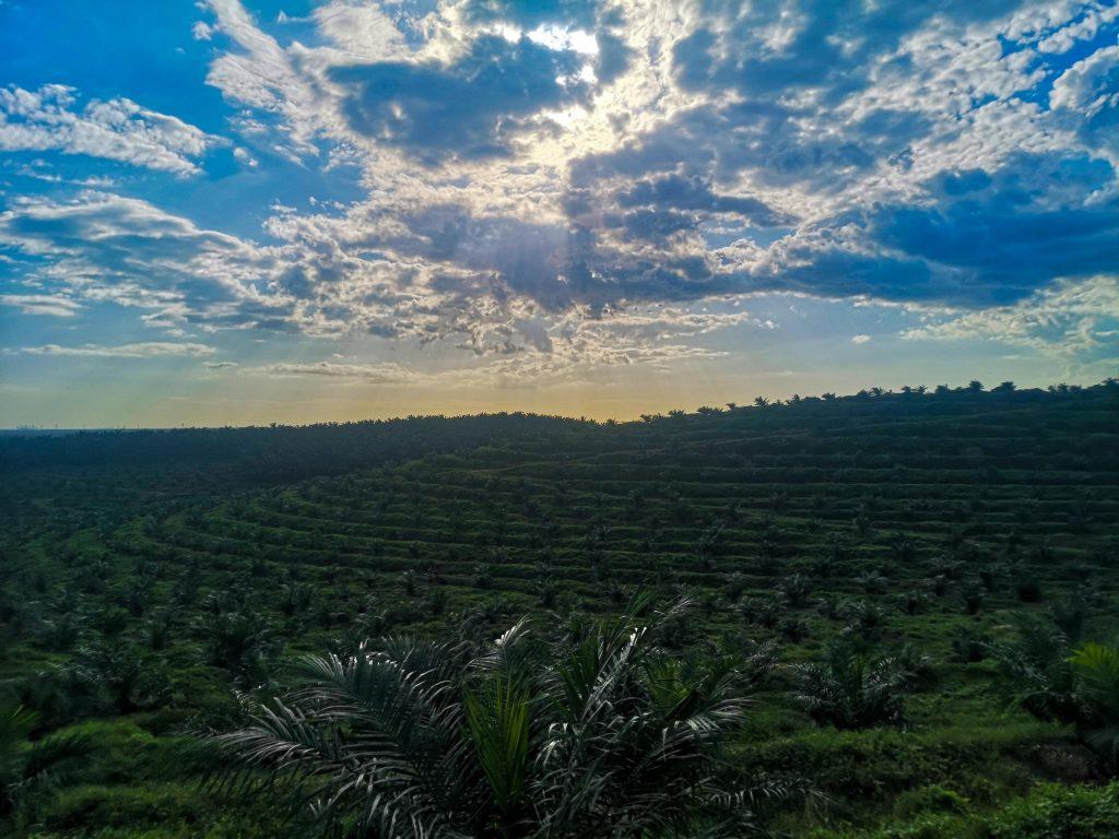 mars hill sepang palm oil terrace
